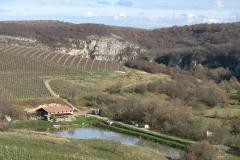 Nisovo vineyards 1